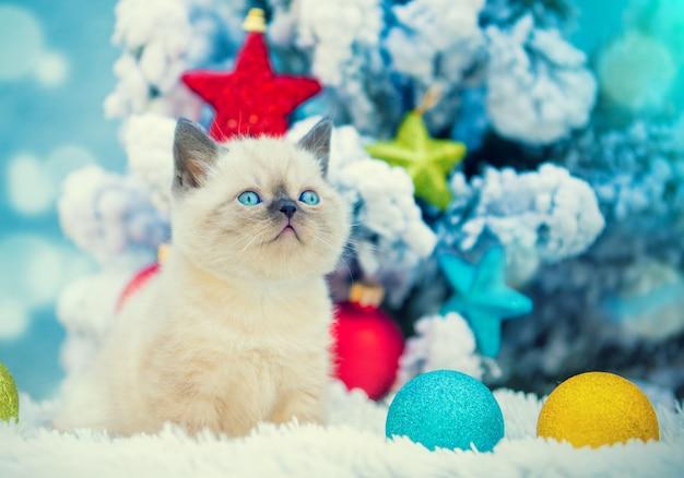 Little kitten sitting near fir tree with christmas decoration.