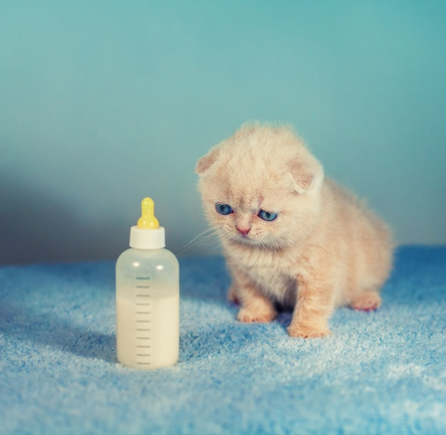 우유병 근처에 앉아 있는 작은 새끼 고양이
