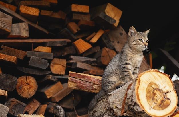 Маленький котенок сидит на деревянном стволе