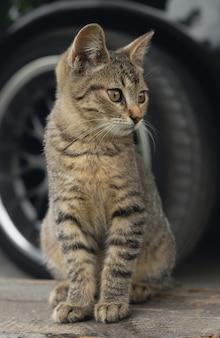 屋外に座っている子猫