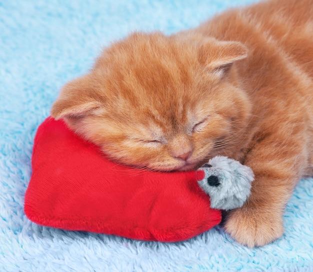Маленький котенок спит на красной подушке в форме сердца