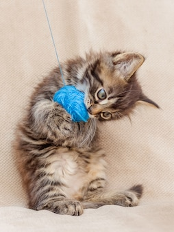 A little kitten stands on his hind legs playing with a tangle of thread