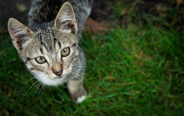 草の中を歩く子猫