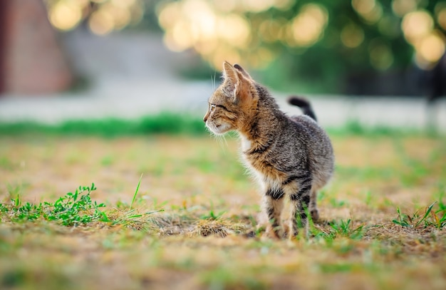 작은 새끼 고양이 산책