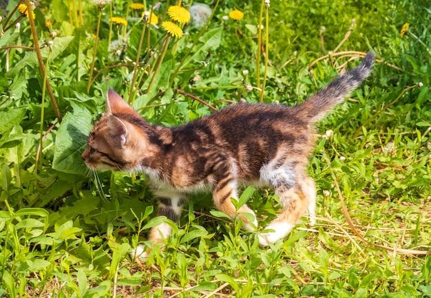 Маленький котенок с галстуком-бабочкой в цветах одуванчика