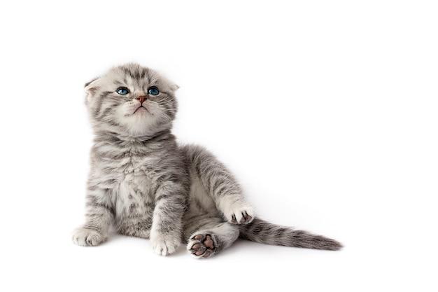Little kitten on a white
