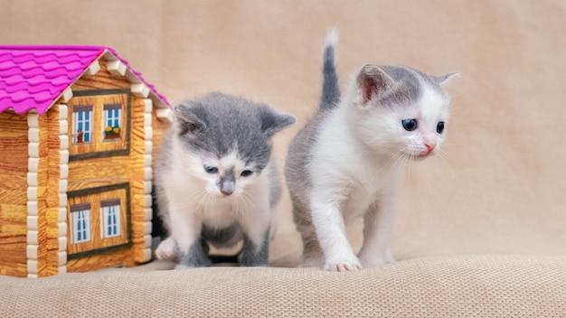 小さな子猫がおもちゃの家の近くで遊んでいます