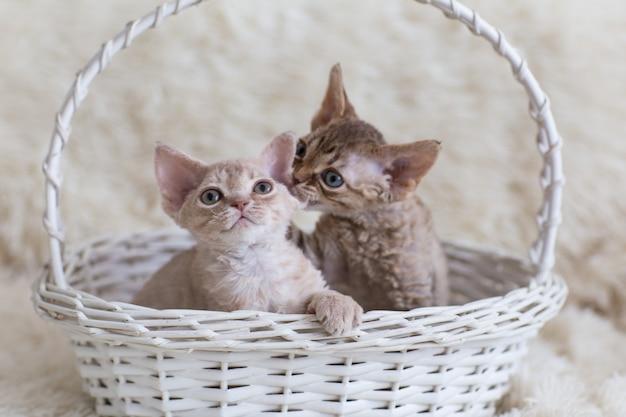 白い枝編み細工品バスケットの小さな子猫