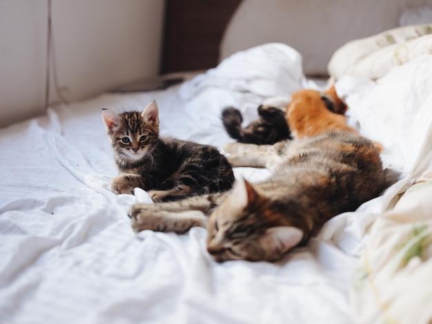 ベッドに横たわっている小さな子猫楽しいペット