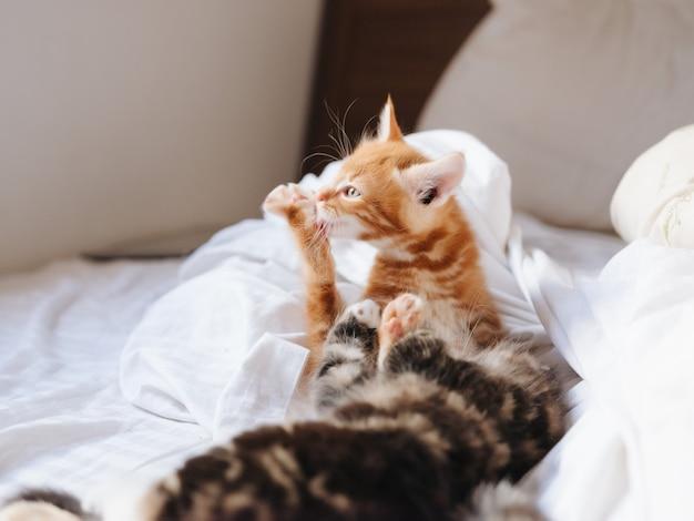 Маленькие котята лежат на кровати веселые домашние животные