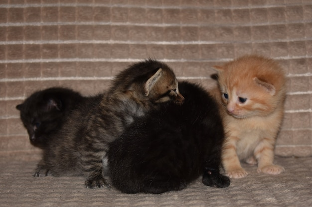 Маленькие котята играют на диване