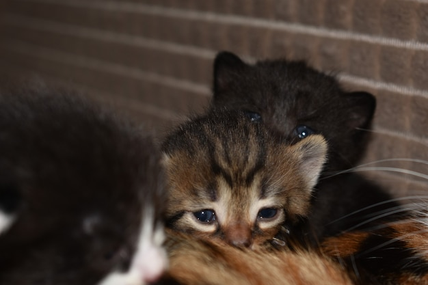 小さな子猫がソファで遊ぶ