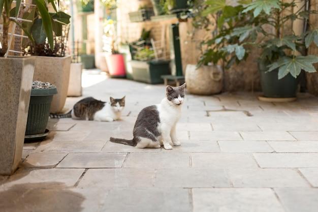 モンテネグロの都会の路上で小さな子猫
