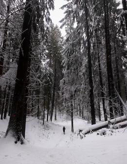 Маленький человечек в зимнем северном лесу среди огромных деревьев