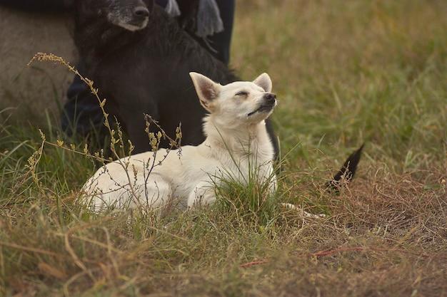 Маленькая смешанная собака породы весело играет в траве