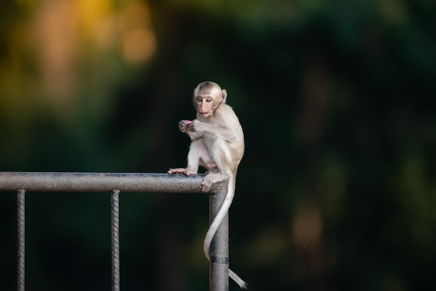 The little monkey baby is playing naughty