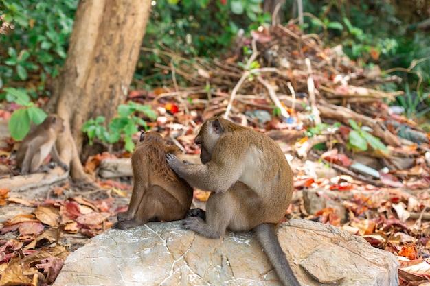 Little monkey cubs life on a tropical island.