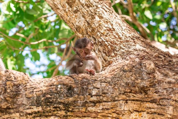 Little monkey portrait, sits on a tree