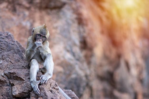 日光と岩の上に座っている小猿