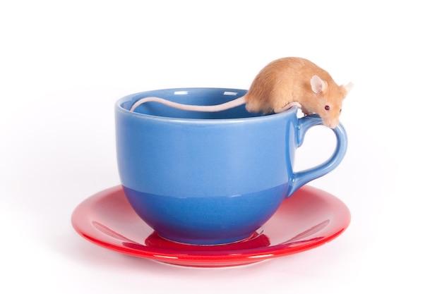 Маленькая мышка сидит на чашке и блюдце, изолированном на белом