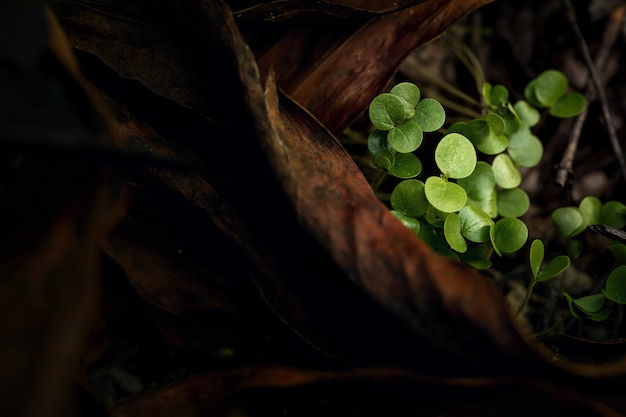 山火事後の乾燥した葉の上の小さな新しい野生植物。火事後の自然の再生。生態学の概念の背景。