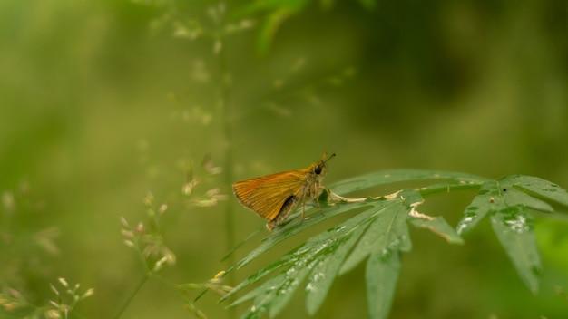 Маленькая оранжевая бабочка сидит на растении в сказочном лесу