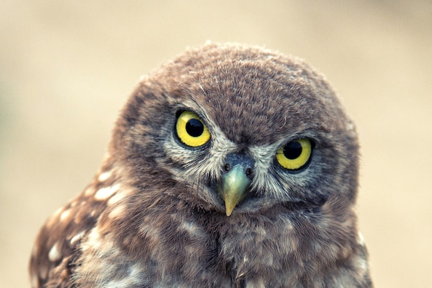 The little owl stands on a beautiful background. portrait