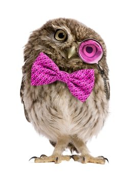 Little owl with a bow tie standing in front of a white background