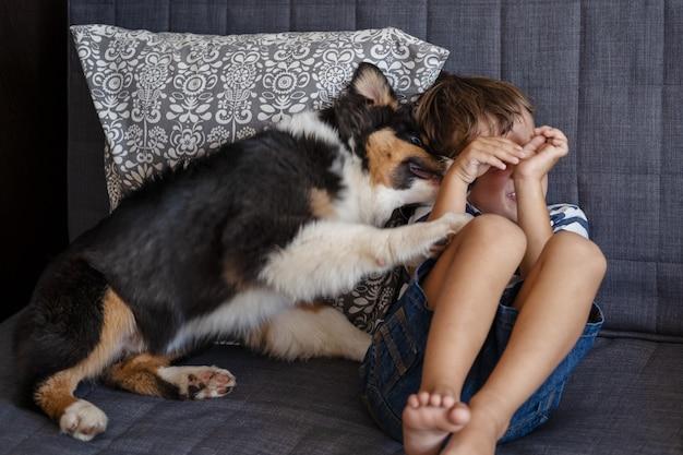 작은 소유자 행복한 소년 거짓말 두려움 호주 셰퍼드 강아지 소파에. 그의 얼굴을 닫습니다. 개는 아이의 얼굴을 핥아보십시오. 놀고 싶어. 세 가지 색상.