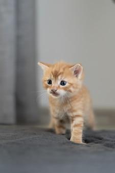 Маленький питомец. млекопитающие