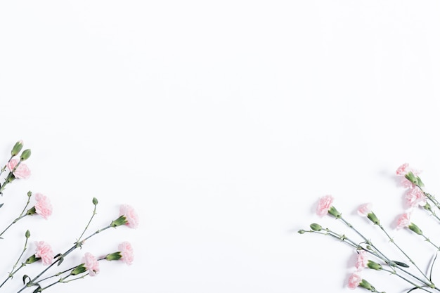 Little pink carnations on white background