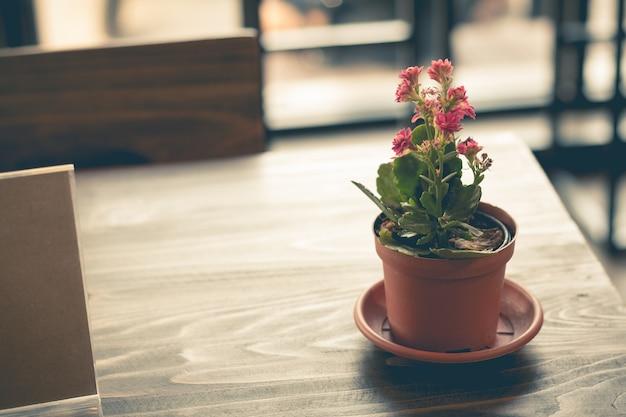 Маленький розовый цветок в вазоне