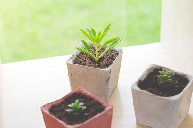 Маленькое растение в небольшом вазоне для украшения сада