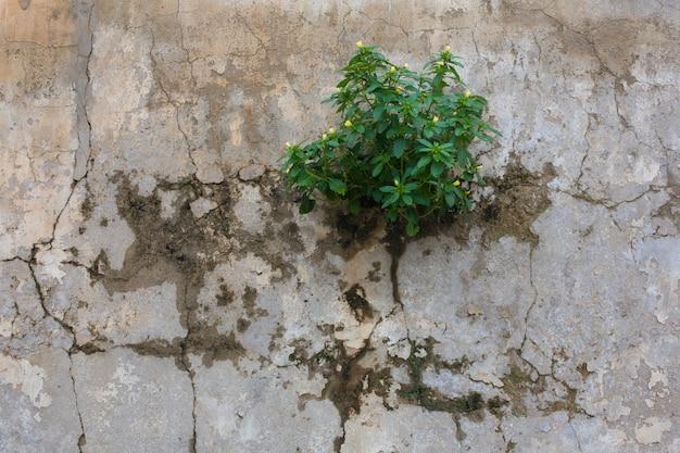 생태와 힘 개념-시멘트 벽에서 자라는 작은 노란색 꽃과 작은 식물