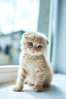 家の窓の近くの小さな遊び心のある子猫。