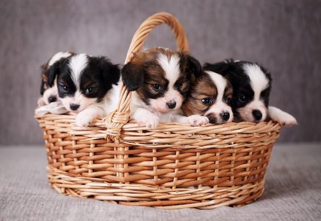 Little puppies in a basket
