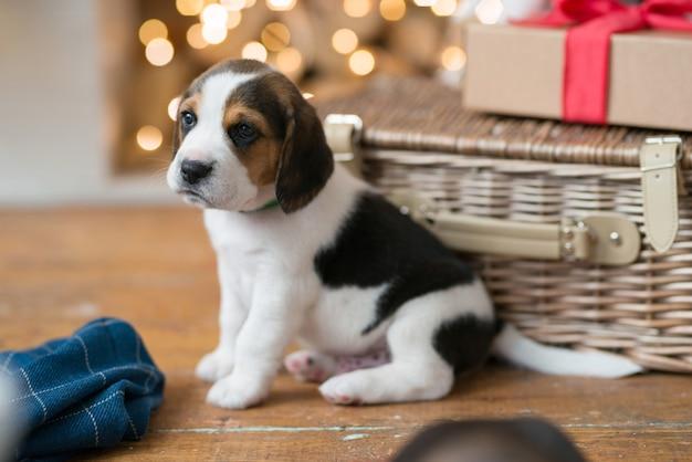 Piccolo cucciolo nel cestino