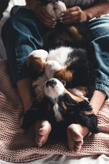 Little puppy of bernese mountain dog on hands of fashionable girl with a nice manicure. animals, fashion