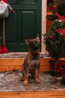 クリスマスの飾りの小さな子犬