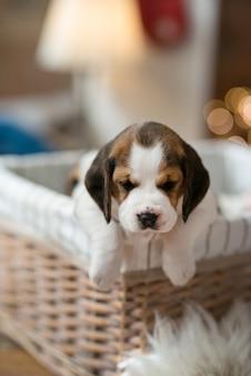 かごの中の小さな子犬