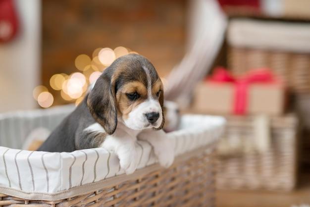 바구니에 작은 강아지