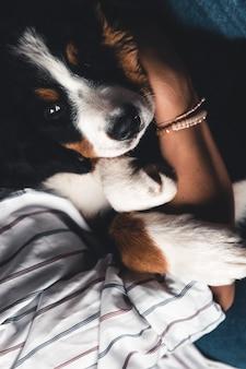 Маленький щенок бернского зенненхунда на руках модной девушки с красивым маникюром. животные, мода