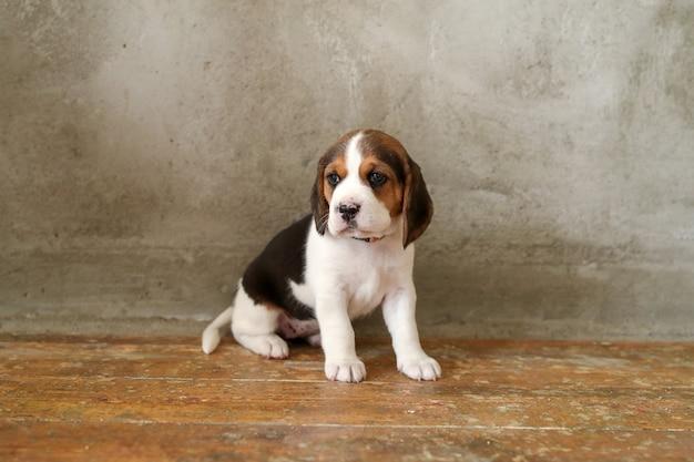 Маленький щенок на деревянном полу