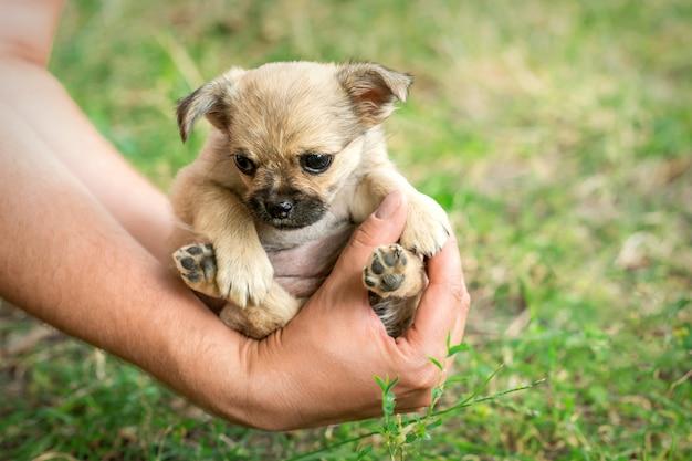 腕の中で座っている子犬