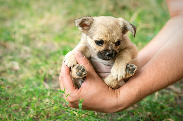 팔에 앉아 작은 강아지