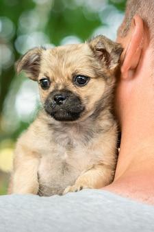 Маленький щенок сидит на плече