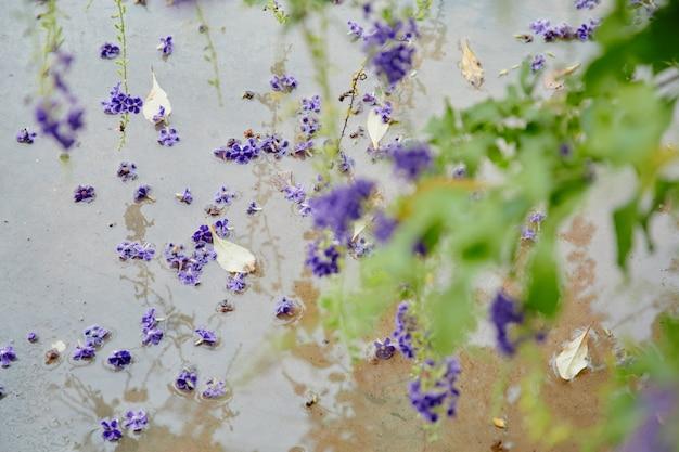 The little purple flower in blooming