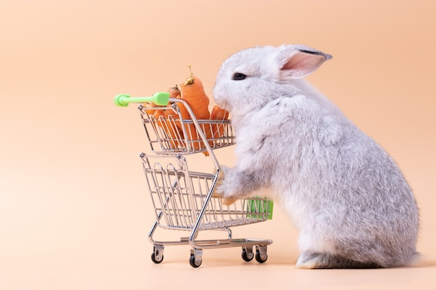 Little rabbit eating carrot on shopping cart with pink rose isolated background