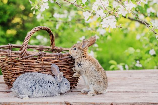 春の果樹園の小さなウサギ