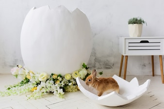 Little rabbit sits in a decorative egg in a studio
